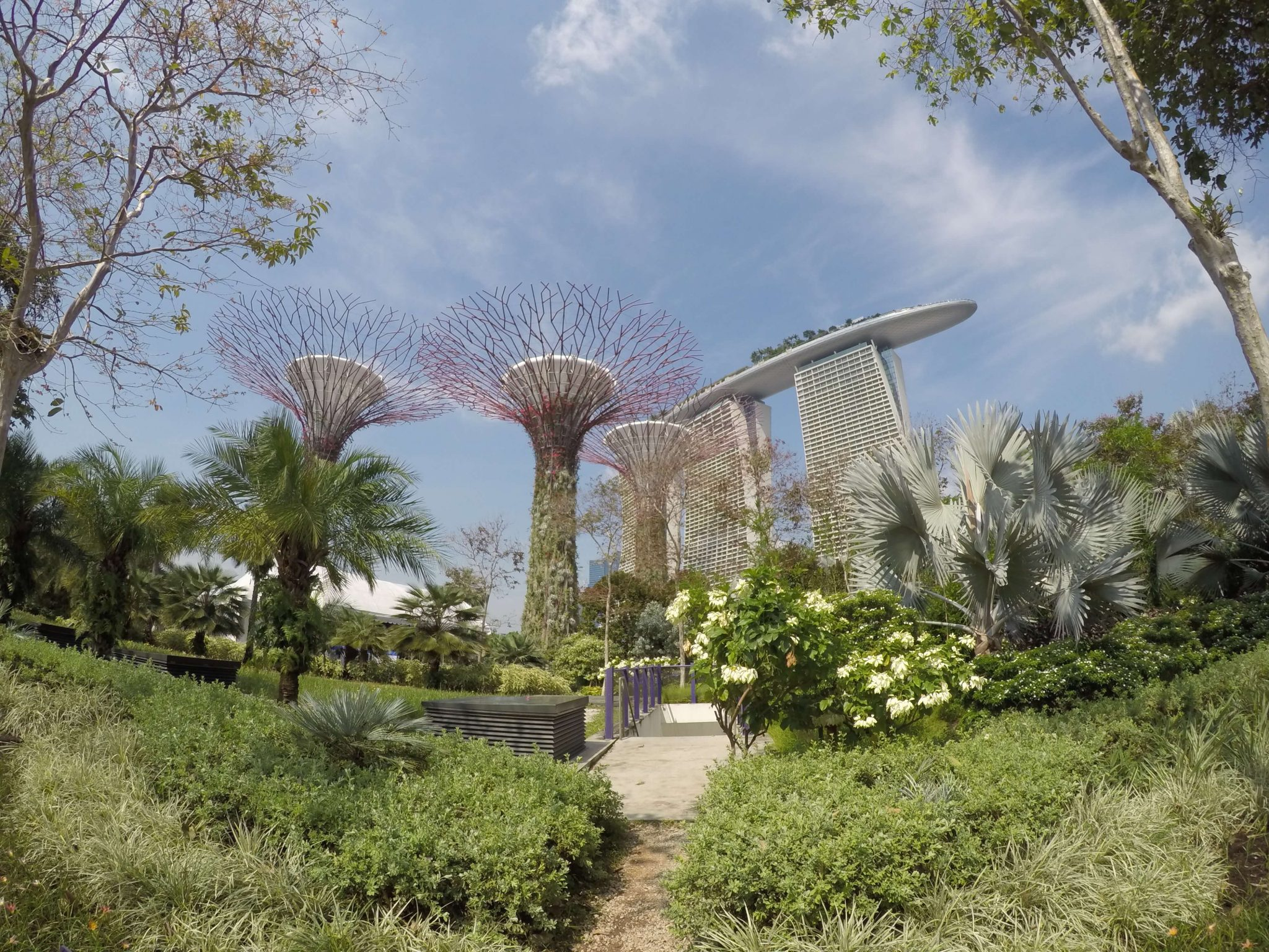 Super tree grove in Singapore.