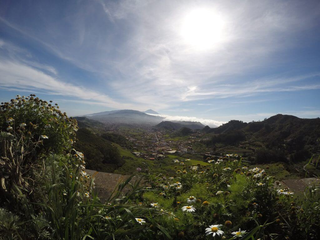 Green valley and flowers in Tenerife