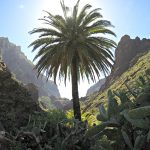 5 Things to Know Before Traveling to Tenerife.